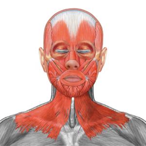 Mišići lica i vrata